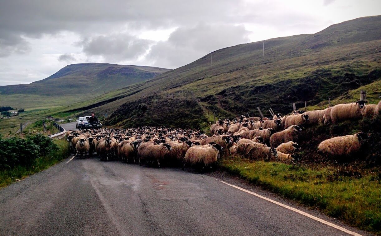 Traffic chaos on Skye
